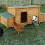 Jak zbudować drewniany kurnik?