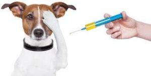 Jak samemu zrobić zastrzyk psu?
